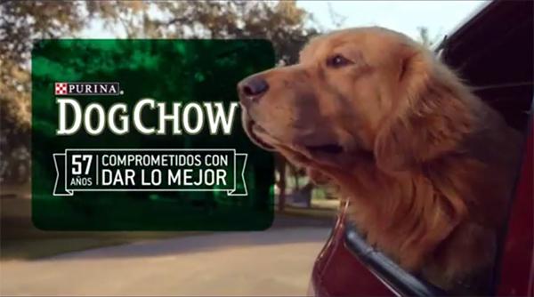 dogchow